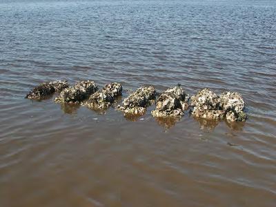 Oyster Installation